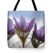 Heralding Spring  Tote Bag