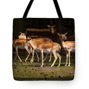 Herd Of Blackbuck Antilopes In A Dark Forest Tote Bag