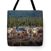 Herd Of Broad Pass Tote Bag
