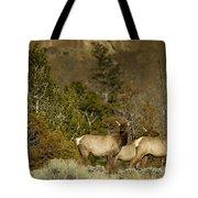 Herd Of Cow Elk   #7672 Tote Bag