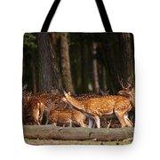 Herd Of Deer In A Dark Forest Tote Bag