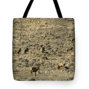 Herd Of Elk   #3218 Tote Bag