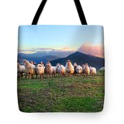 Herd Of Sheep In The Sunset Tote Bag