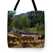 Herd Of Sheep In Tuscany Tote Bag