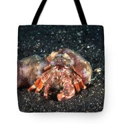 Hermit Crab With Anemone Tote Bag