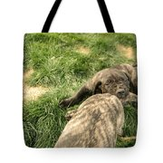 Hey You Come Back Here Buddy Tote Bag