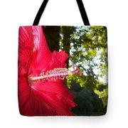 Hibiscus - Lord Baltimore Tote Bag