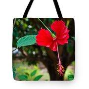 Hibiscus Rosa-sinensis / China Rose Flower Tote Bag