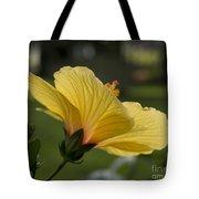Hibiscus 'sunny Wind'  3407 Tote Bag