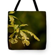Hidden Leaves With A Green Back Ground Tote Bag by Robert D  Brozek