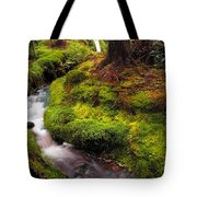 Hidden Woodland Corner. Benmore Botanical Garden. Scotland Tote Bag
