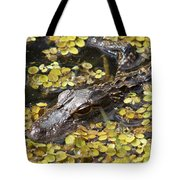 Hiding Alligator Tote Bag