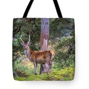 Highland Stag Tote Bag