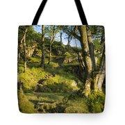 Hillside Forest Tote Bag