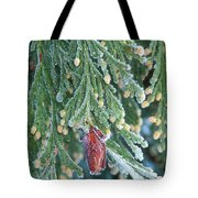 Hoarfrost On Pine Bough Yosemite National Park Tote Bag