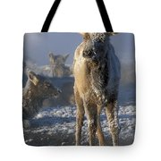 Hoarfrosted Elk Calf Tote Bag