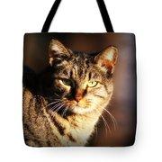 Homeless Cat Tote Bag