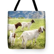 Homeward Bound Tote Bag by Amy Tyler
