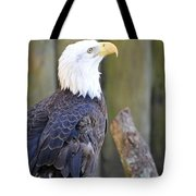 Homosassa Springs Bald Eagle Tote Bag