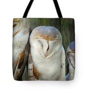 Homosassa Springs Snowy Owls 1 Tote Bag
