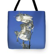 Honesty Seed Pods Tote Bag