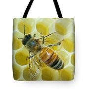 Honey Bee In Hive Tote Bag