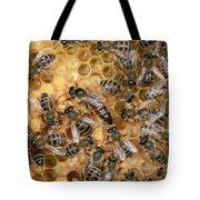 Honey Bee Queen And Colony On Honeycomb Tote Bag