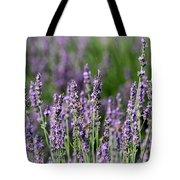 Honeybees On Lavender Flowers Tote Bag