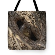 Hooded Merganser In The Knot Hole  Tote Bag