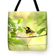 Hooded Warbler - Img_9274-007 Tote Bag