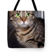 Hoping For A Home Tote Bag