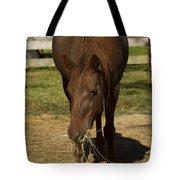 Horse 32 Tote Bag