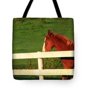 Horse And White Fence Tote Bag