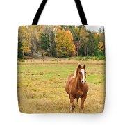 Horse In Field-fall Tote Bag