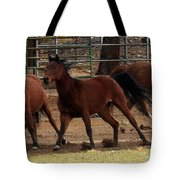 Horse Play Painting  Tote Bag