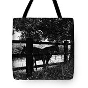 Horses By The Fence Tote Bag