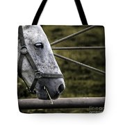 Horse's Head Tote Bag