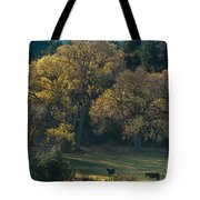 Horses In A Backlit Field With Fall Colored Trees Sedo Tote Bag