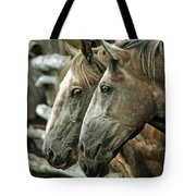 Horses Looking Through The Fence Tote Bag