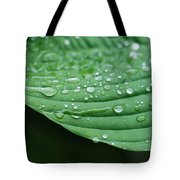 Hosta Leaves Tote Bag