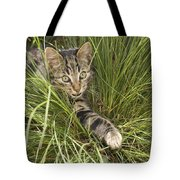 House Cat Hunting In Grass Germany Tote Bag