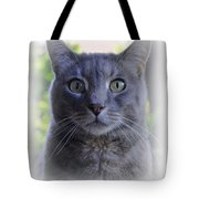 House Cat Stare Tote Bag
