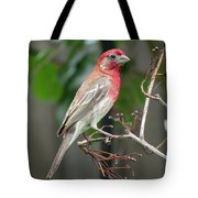 House Finch At Rest Tote Bag