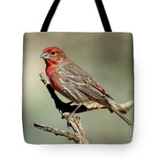 House Finch Carpodacus Mexicanus Tote Bag