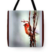 House Finch - Finch 2241-004 Tote Bag