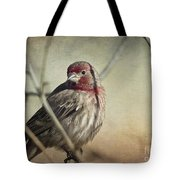 House Finch Two Tote Bag