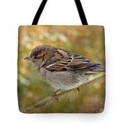 House Sparrow II Tote Bag