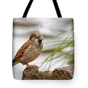 House Sparrow Passer Domesticus On The Perch Tote Bag