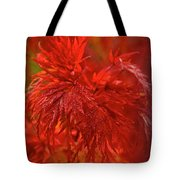 Hubble Galaxy With Red Maple Foliage Tote Bag