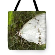 Huge White Morpho Butterfly Tote Bag